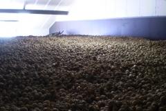 aardappel-opslag-ruimte